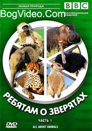 BBC: Ребятам о зверятах. Гепард Чику