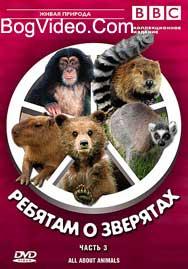 BBC: Ребятам о зверятах. Шимпанзе Чарли