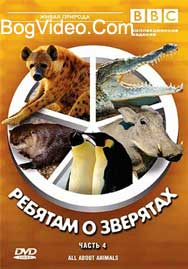 BBC: Ребятам о зверятах. Нильский крокодил Карл