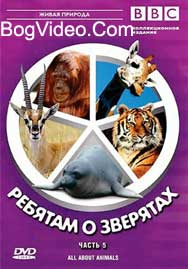 BBC: Ребятам о зверятах. Орангутанг Отто