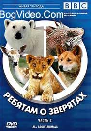 BBC: Ребятам о зверятах. Игуана Игби