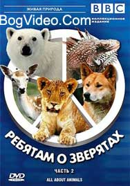 BBC: Ребятам о зверятах. Медвежонок Перси