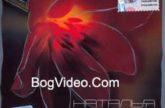 Наталья Чайковская. Альбом mp3 Откровение. 2009 год