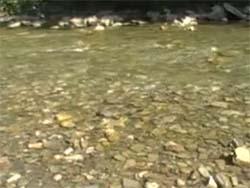 Жизни река бежит